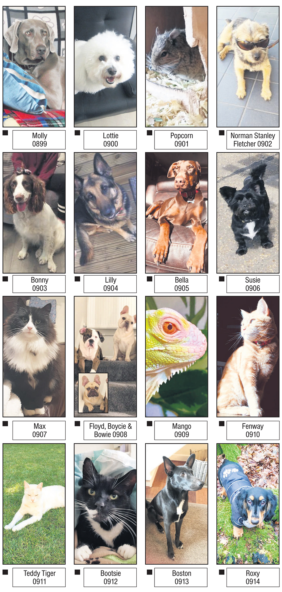Epping Forest Guardian: EFG pets pawtrait voting page